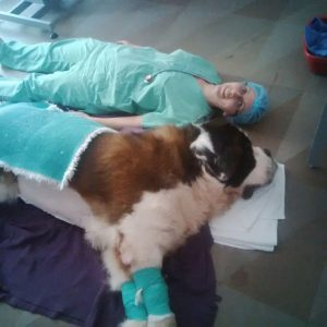 Saved St Bernard